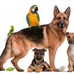 retraites-animaux-pa