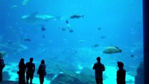 Aquarium_of_georgia
