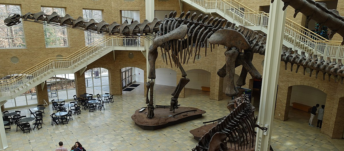 Le Fernbank Museum of Natural History