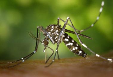 Un été sans moustique en Géorgie