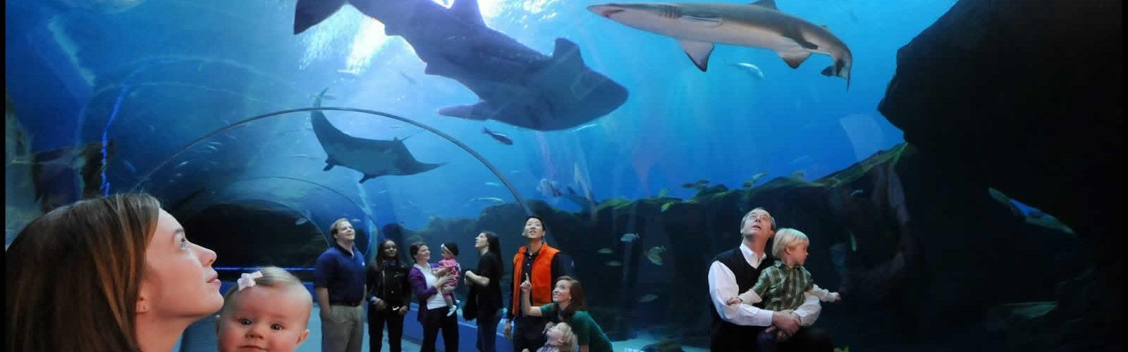 ceetiz-visiter-atlanta-tours-attractions-activites-une