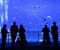 The Georgia Aquarium à Atlanta, en images