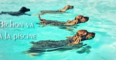 parc-piedmont-chiens-piscine-diapo