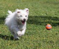 Les parcs à chiens à Atlanta