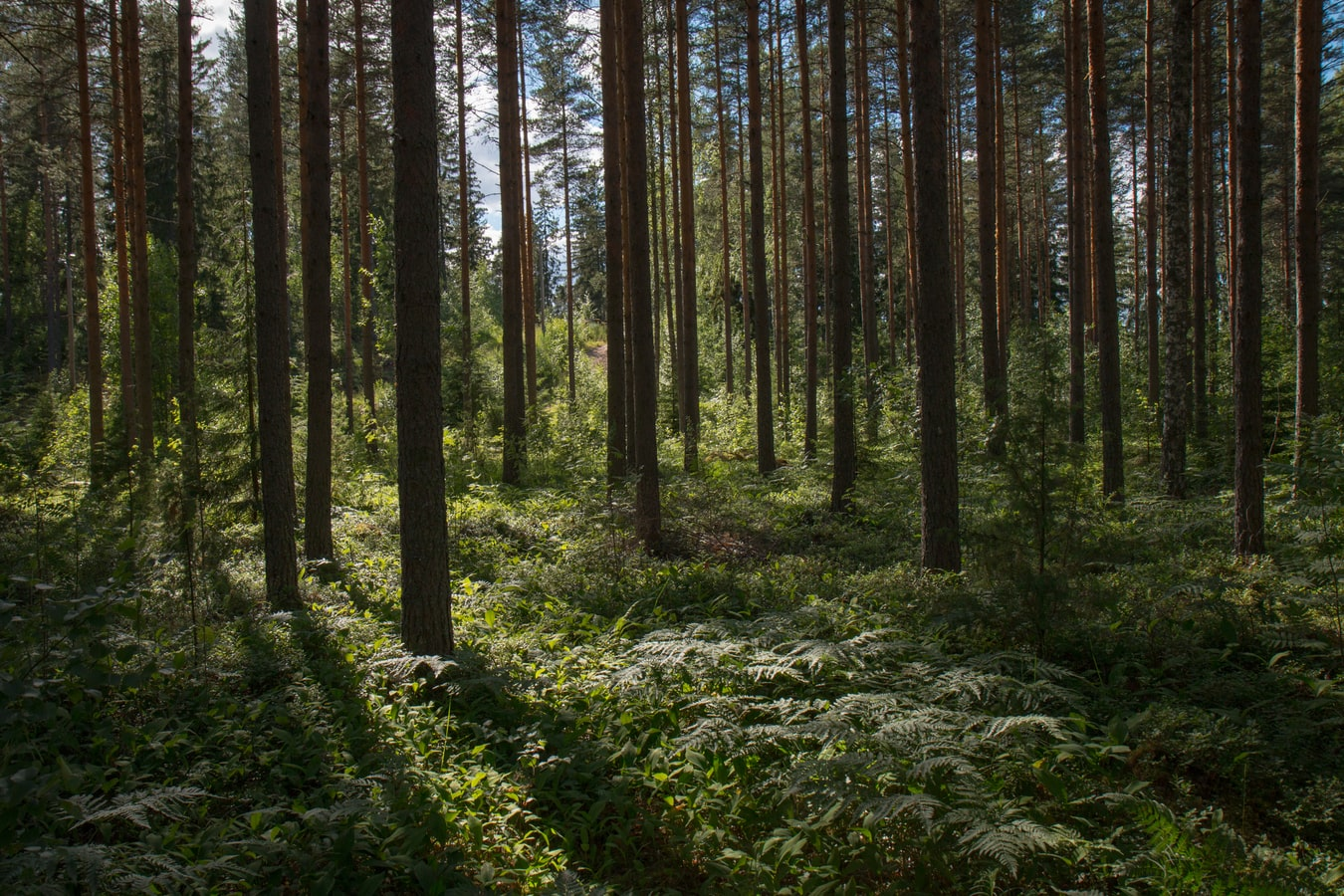 Randonnée au Cascade Springs Nature Preserve Trail