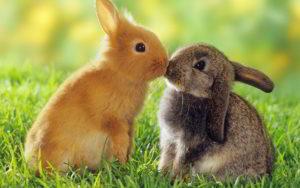 rabbitt-kissing