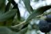 durance-produits-naturels-beaute-provence-p-02