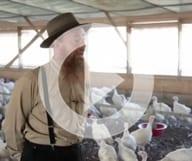 La communauté Amish aux états-Unis – Zapping