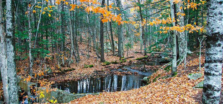 flume-gorge-park-ARTICLE