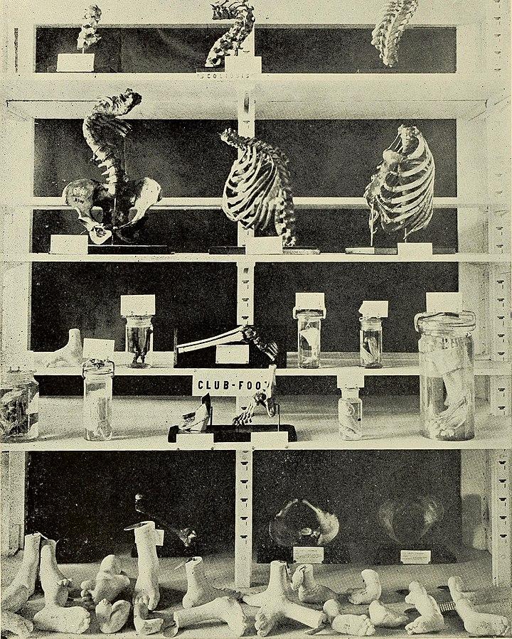 Warren_Anatomical_Museum_BOSTON