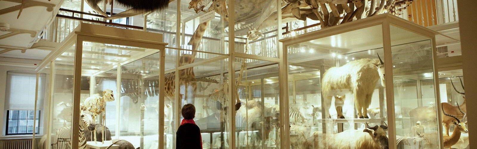harvard-musee-histoires-naturelles-diapo-featured2