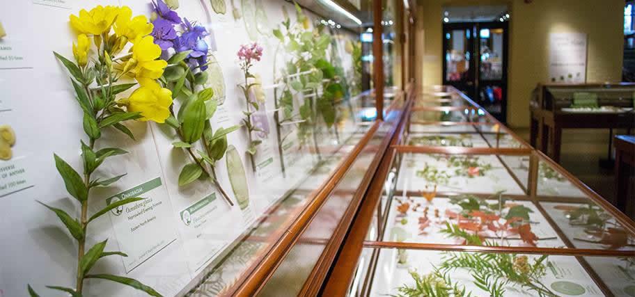 entree-gratuite-musees-culture-boston-harvard-museum-of-natural-history