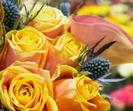 Le monde des fleurs