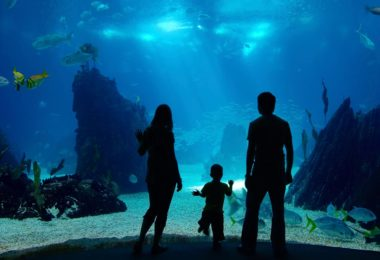 monterey-bay-aquarium-at-california-top