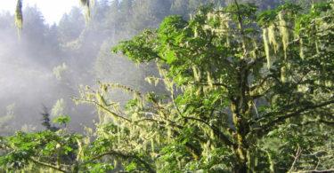 purisima-creek-redwood-reserve-parc-randonnee-une