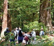 Purisima Creek Redwood, le paradis des randonneurs