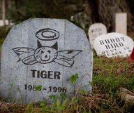 Le Pet Presidio Cemetery à San Francisco