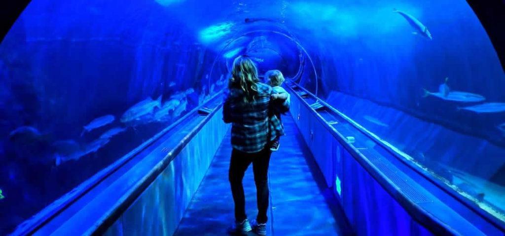 pier-39-san-francisco-ponton-aquarium-of-the-bay