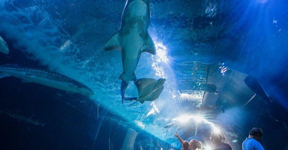 aquarium-of-the-bay-pier-39-san-francisco-une