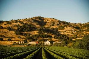 pique-niquer-domaine-viticole-napa-valley-regusci-winery