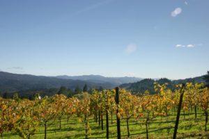 Schramsberg Vineyards – Le vignoble historique