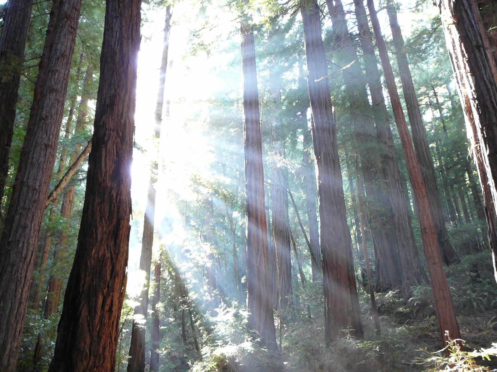 Redwood Coast, entre rivages, villages et séquoias