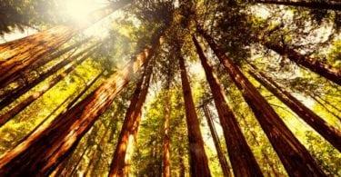 journee-sequoias-gean-san-francisco-ceetiz-push