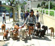 Les Dog Sitters, des nounous pour vos toutous à San Francisco