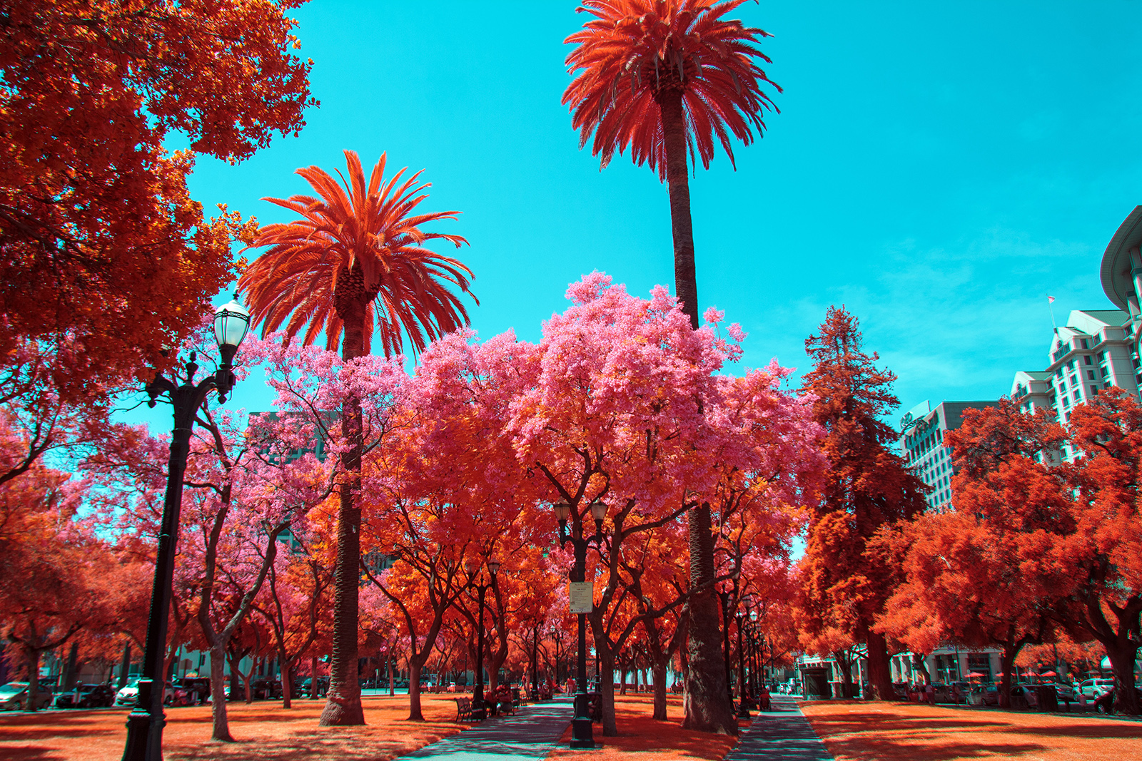Une journée à San Jose