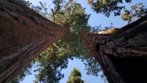 merveilles-naturelles-parc-nationaux-etats-unis_sequoia