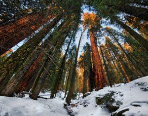 sequoia_national_park