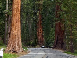 redwood-coast-entre-rivages-villages-sequoias-californie-nord-g-02