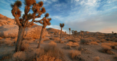 journee-a-joshua-tree