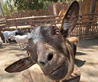 Le Safari Park du Zoo de San Diego