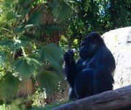 Le Zoo de San Diego – En images