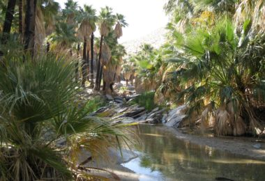 Les Indian Canyons de Palm Springs
