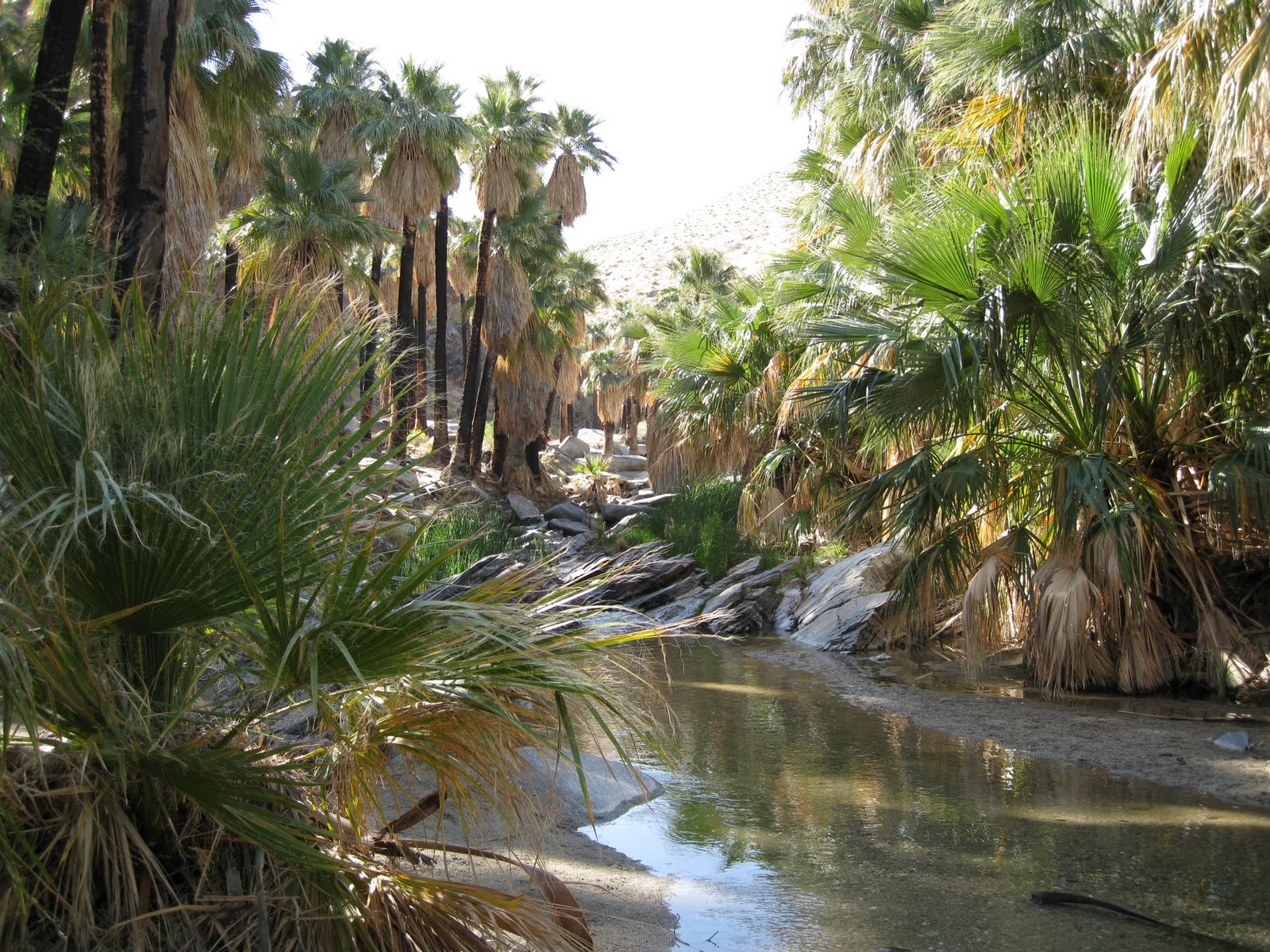 Les Indian Canyons de Palm Springs