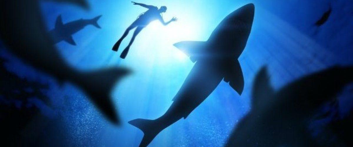requins-predateur-danger-mer-ocean-une2