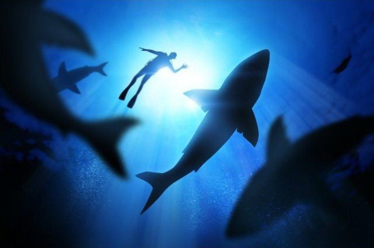 Les requins en Californie