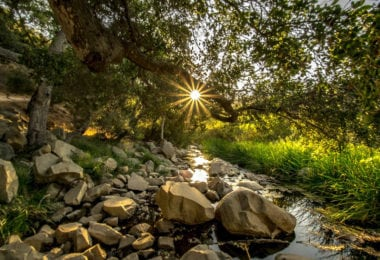 visiter-decouvrir-the-elfin-forest-san-diego-une