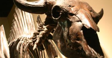 Musée d'histoire naturelle de Los Angeles, visite de ses trésors et fossiles