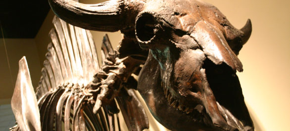 Le musée d'histoire naturelle de Los Angeles
