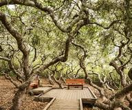 The Elfin Forest, la forêt enchantée de San Diego