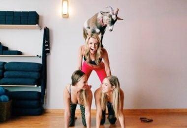 Des chèvres zens