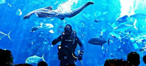 L'Aquarium du Pacifique à Long Beach