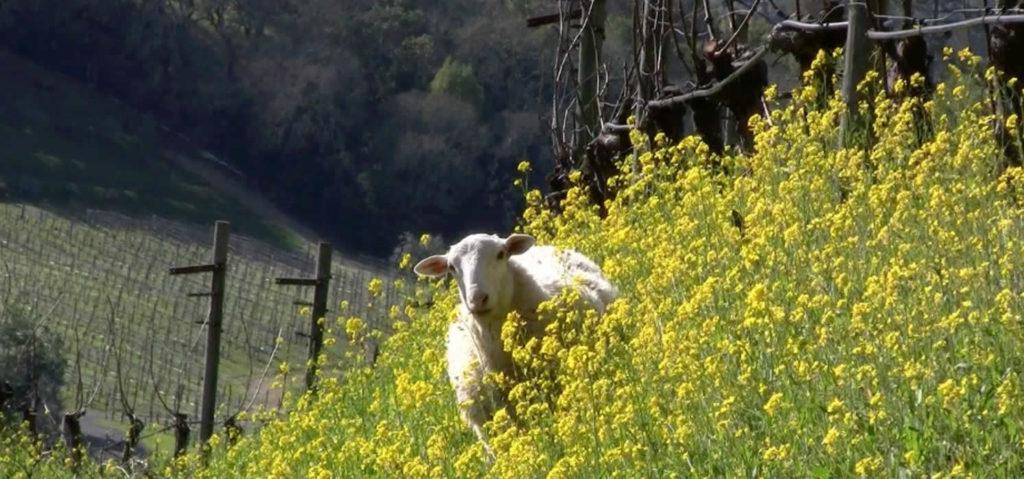 route-des-vins-biodynamiques-autour-san-francisco-californie-benzinger-family2