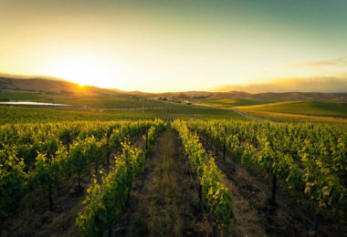 route-des-vins-biodynamiques-autour-san-francisco-californie-une2