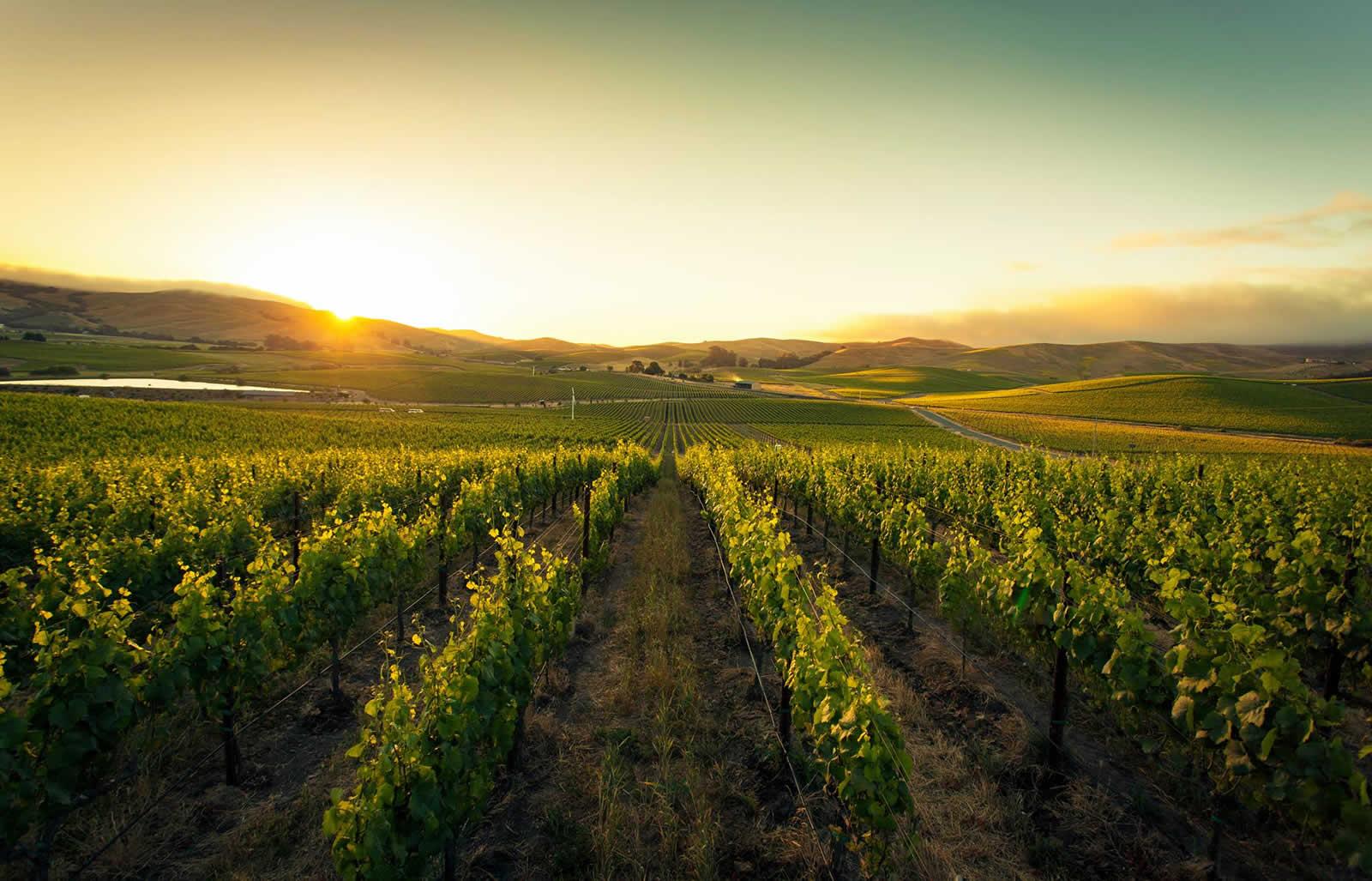 La route des vins biodynamiques autour de San Francisco