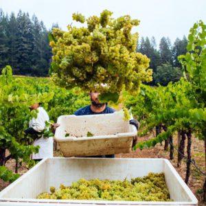 Stony Hill Vineyard – Le vignoble magnifique