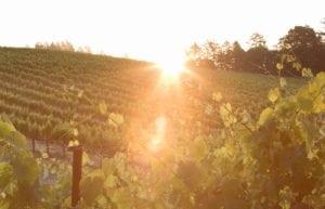 pique-niquer-domaine-viticole-napa-valley-pride-mountain
